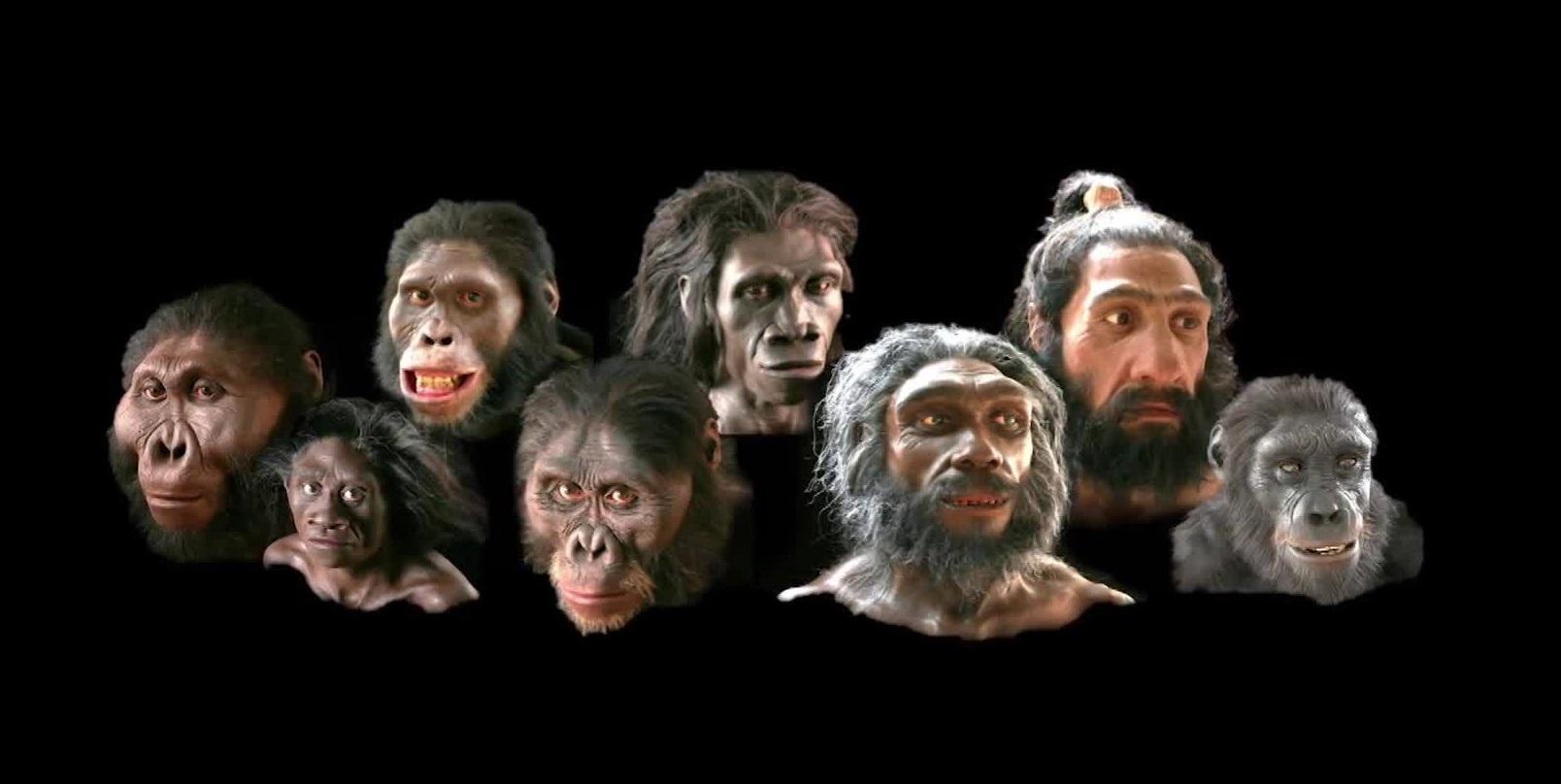 Khuôn mặt con người thay đổi thế nào sau 6 triệu năm?