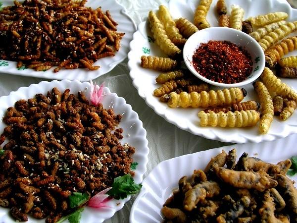 Đây là lý do bạn nên ăn côn trùng