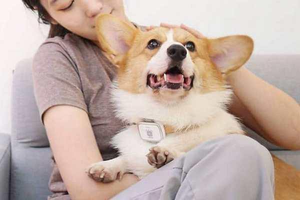 Xiaomi ra mắt vòng bảo vệ thú cưng và bình lọc nước có thể loại bỏ clo, kim loại nặng