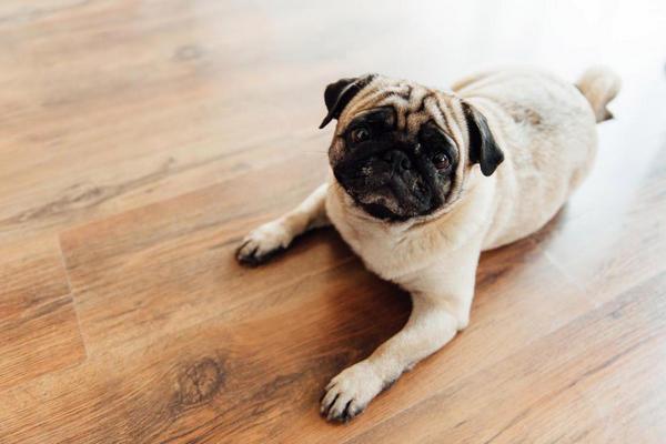19 dấu hiệu cho thấy chó cưng đang ngầm giao tiếp với chủ nhân