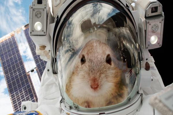 20 con chuột sẽ được du hành vụ trụ để giúp chúng ta tìm hiểu về cách sống sót trên sao Hỏa