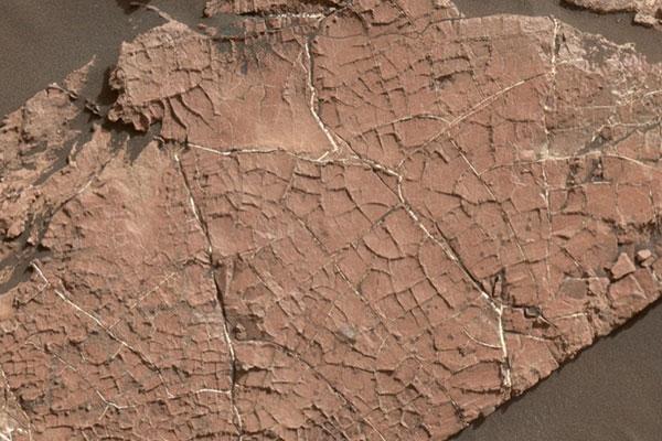 NASA đã vô tình phá hủy bằng chứng về sự sống trên sao Hỏa?