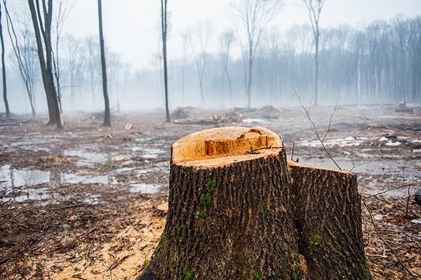 Thế giới sắp không còn đủ rừng nhiệt đới để hấp thụ CO2 do nạn phá rừng tràn lan