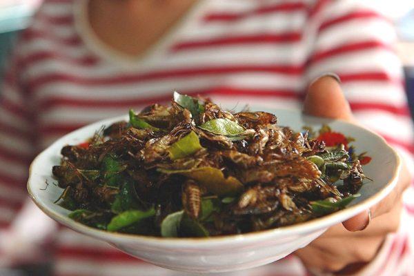 Ăn dế và côn trùng rất tốt cho đường ruột