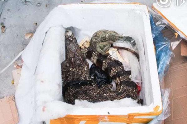 Trung Quốc: Đặt mua thực phẩm chức năng qua mạng, nhận được… nguyên một con cá sấu