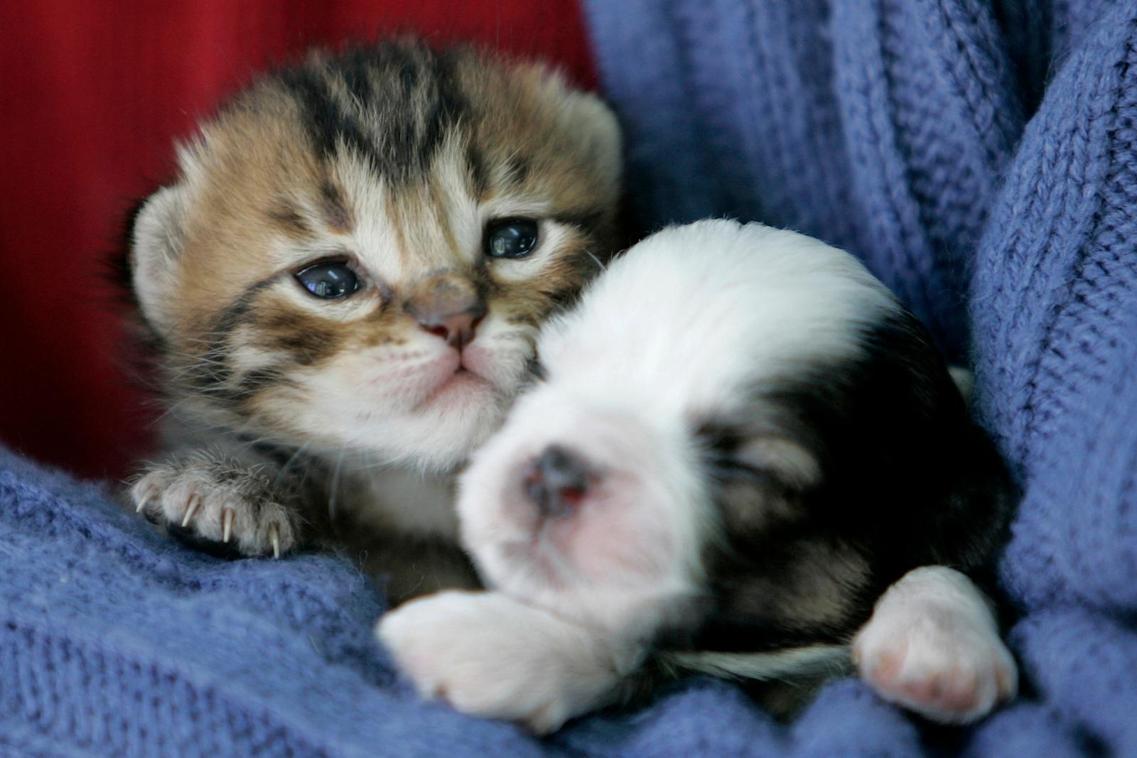 Vì thế, giờ đây nước Anh đang dự định sẽ ban hành lệnh cấm các cửa hàng thú  cưng và các bên thứ ba bán chó con và mèo con.