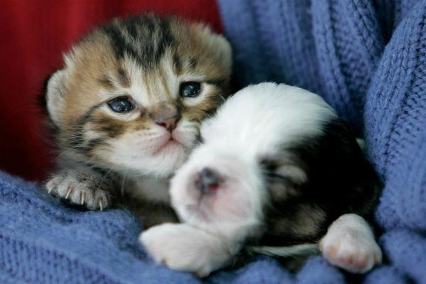 Anh cấm các cửa hàng thú cưng bán chó con, mèo con