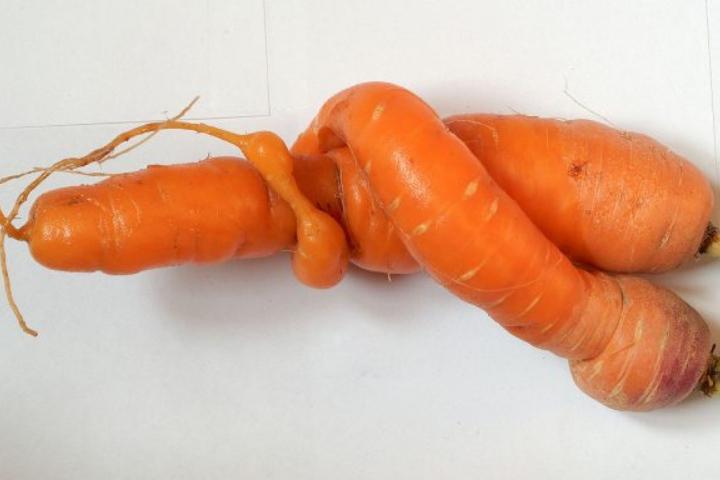 Chỉ vì... xấu xí, 50 triệu tấn trái cây và rau củ ở châu Âu bị vứt bỏ mỗi năm