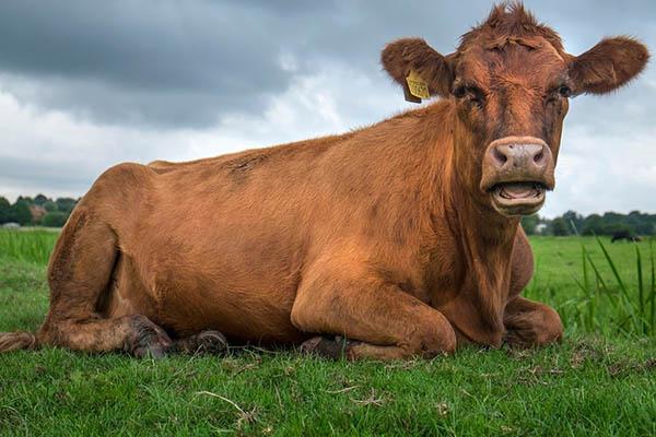 Chăn nuôi công nghiệp là một trong những tội ác tồi tệ nhất lịch sử