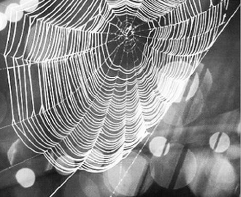 Bào chế vắc-xin dựa vào... tơ nhện