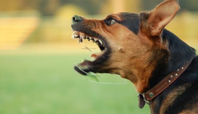 Chủ chó tấn công dẫn đến chết người phải đền hơn 170 triệu đồng, cư dân mạng chê án phạt quá nhẹ