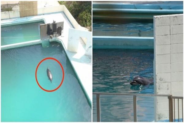 """Chú cá heo cô đơn bị bỏ rơi tại thủy cung ở Nhật Bản sẽ khiến bạn """"tan nát cõi lòng"""""""