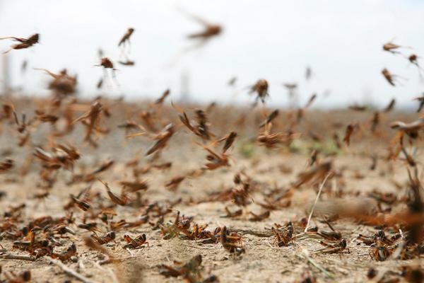 """Giới khoa học lo ngại trước kế hoạch lập """"đội quân côn trùng"""" của Mỹ"""