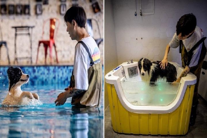 Thanh niên Trung Quốc xây biệt thự 500.000 USD tặng chú chó đã giúp mình giàu có