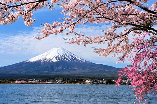 """Khi mẹ thiên nhiên """"hoang mang"""" vì biến đổi khí hậu: Hoa anh đào ở Nhật Bản nở rộ giữa mùa thu."""