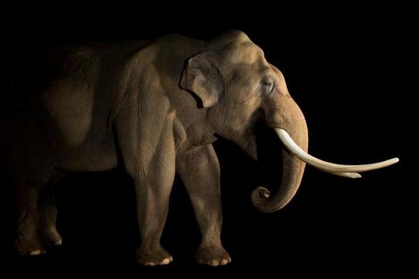 Sẽ mất hàng triệu năm tiến hóa mới đủ bù đắp được số sinh vật tuyệt chủng trong 50 năm tới