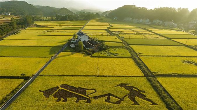 """Trung Quốc nghiên cứu thành công 'lúa biển""""', có khả năng nuôi 80 triệu người"""