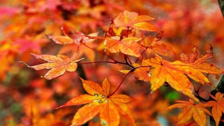 Bạn nhìn thấy những chiếc lá này có màu gì?