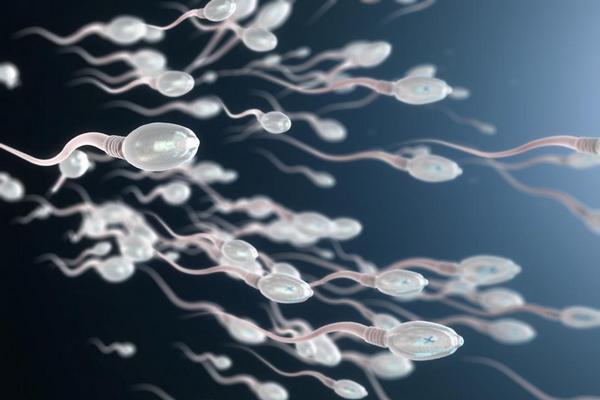 Biến đổi khí hậu và nhiệt độ cao có thể khiến số lượng tinh trùng của nam giới suy giảm