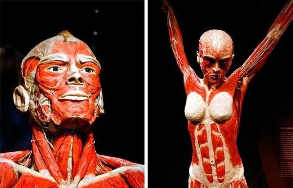 10 sự thật kì lạ về những bí ẩn trong cơ thể con người