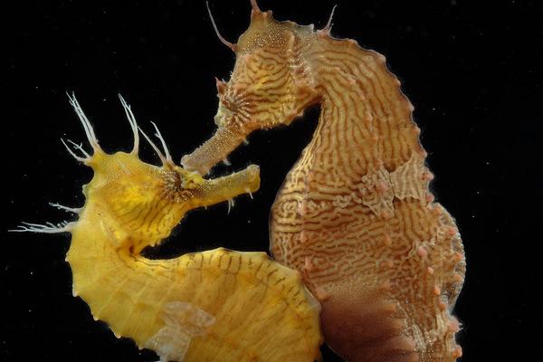"""Những loài sinh vật dưới đáy biển tìm thấy """"một nửa"""" của mình bằng cách nào?"""
