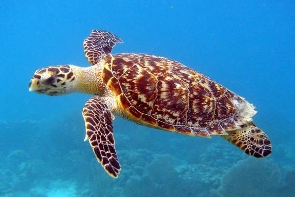 """""""Nhờ"""" con người, giờ đây, nhựa ngập bụng những loài sinh vật biển"""