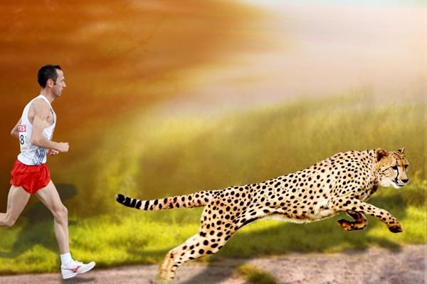 Tại sao con người không thể chạy nhanh như loài báo?
