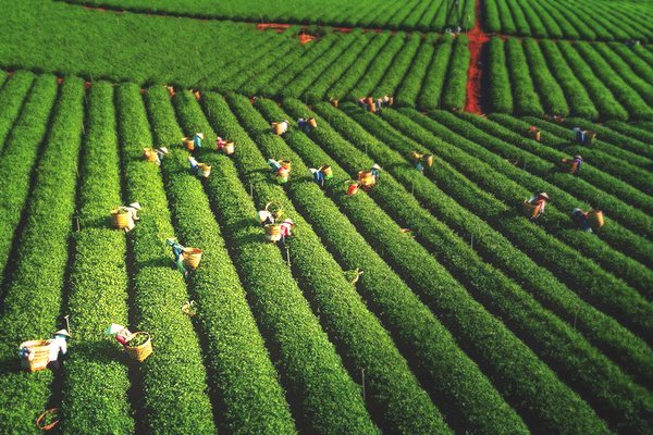 Nhiếp ảnh gia Việt Nam góp mặt trong danh sách thắng Giải thưởng nhiếp ảnh drone 2018
