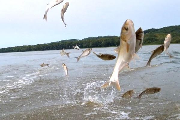 [Video slowmotion]: Chiêm ngưỡng khoảnh khắc đàn cá nhảy múa trên mặt nước với tốc độ siêu chậm