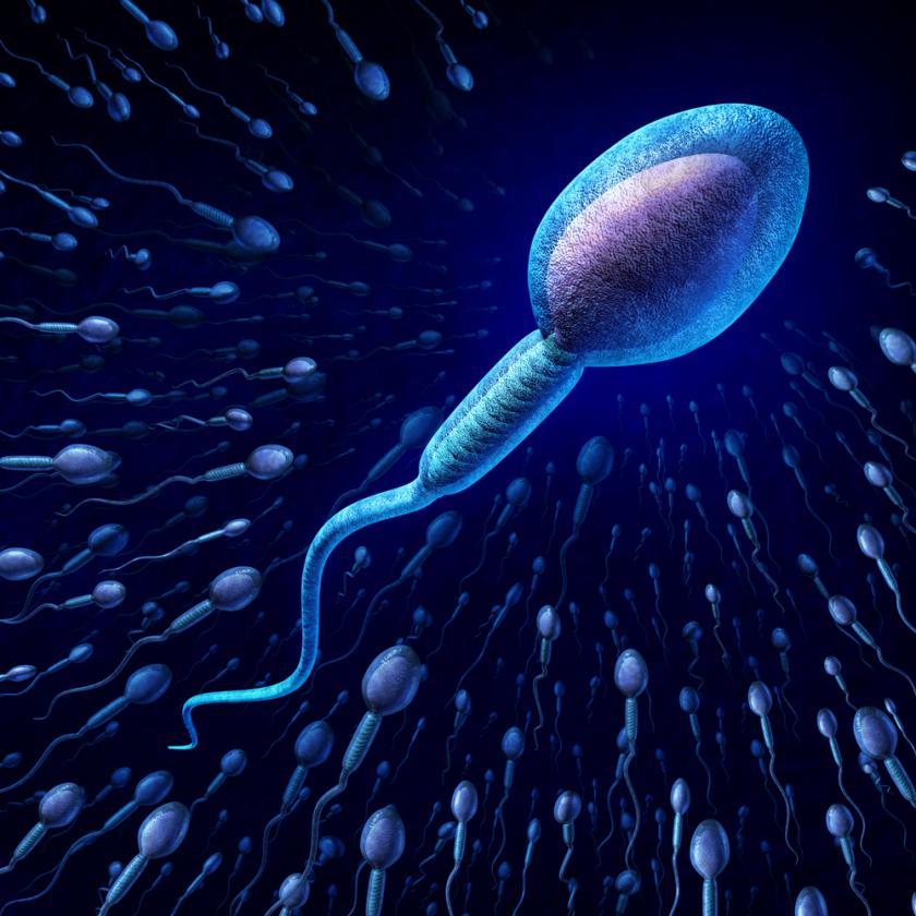 Khoa học làm sáng tỏ cơ chế loại những con tinh trùng yếu khỏi cuộc chơi