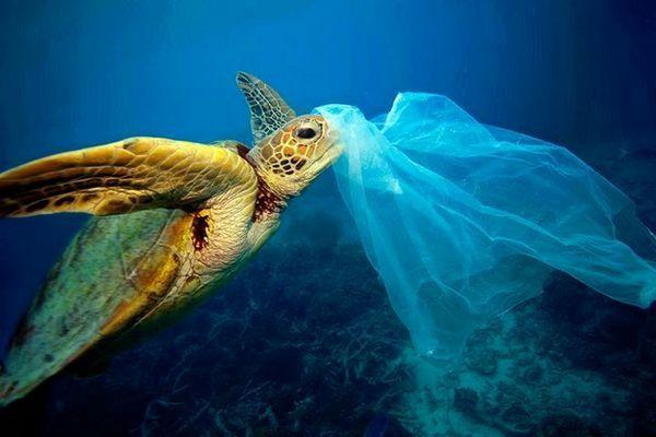 Báo động: Ngay cả loài sinh sống ở vùng biển sâu nhất thế giới cũng đã ăn phải rác thải nhựa