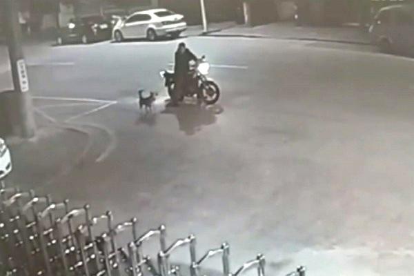 Trung Quốc: Thanh niên say xỉn... cãi nhau với chó suốt nửa tiếng đồng hồ, bị bắt vì gây mất trật tự