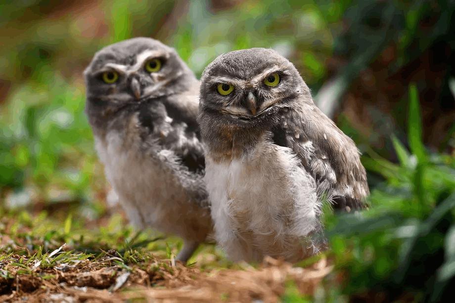 Loạt thử thách về động vật 'gây bão' trên Twitter