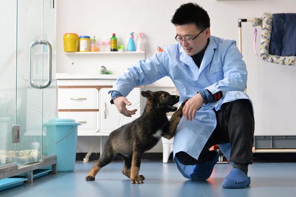 Trung Quốc nhân bản vô tính chó cảnh sát nhằm đẩy nhanh tốc độ đào tạo