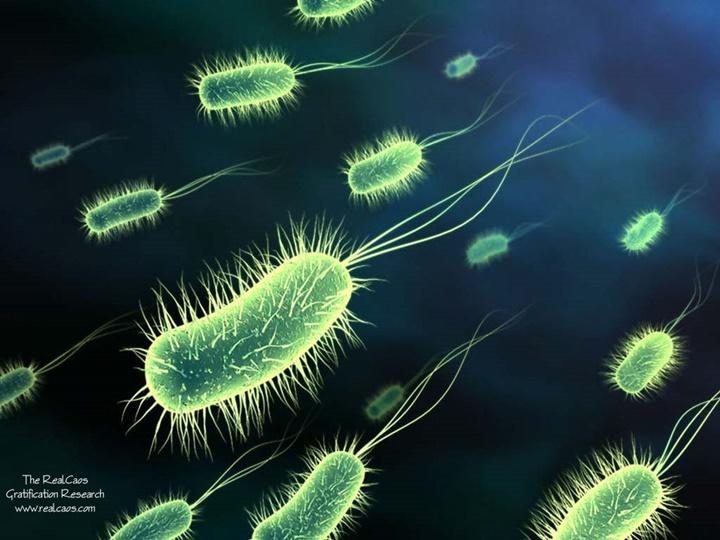 Vi khuẩn có thể tuyệt chủng không?