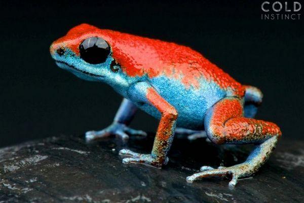 22 bức hình cực đẹp về những sinh vật nguy hiểm và sặc sỡ nhất hành tinh