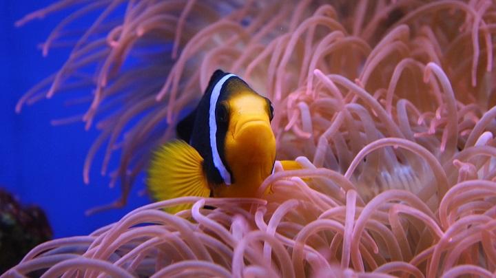Sinh vật biển đang bị biến đổi khí hậu tận diệt nhanh hơn các loài sống trên đất liền