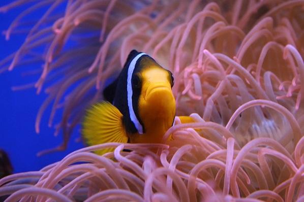 """Sinh vật biển đang bị biến đổi khí """"hậu tận"""" diệt nhanh hơn các loài sống trên đất liền"""