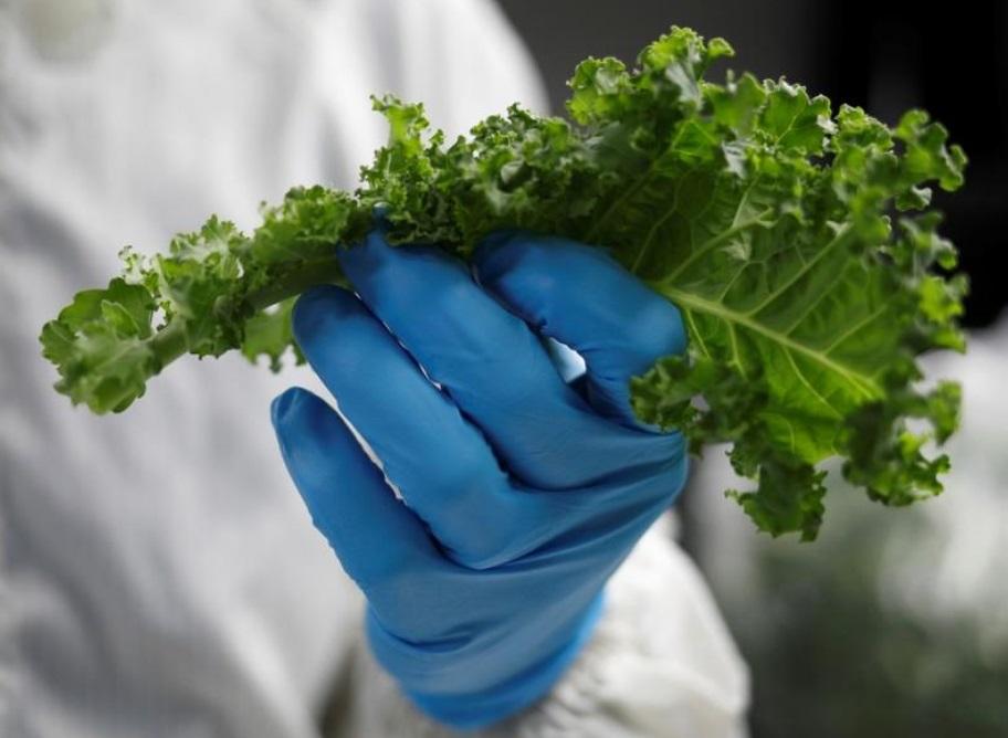 Diện tích chỉ bằng 1/5 Hà Nội, Singapore trồng rau trên mái nhà, nuôi tôm trong phòng thí nghiệm