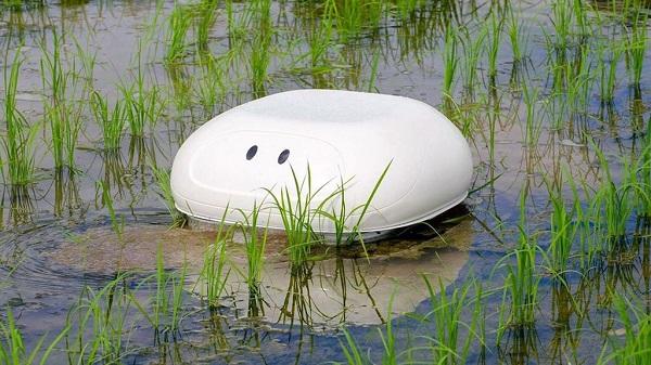 Nông dân Nhật dùng robot 'vịt' giữ sạch ruộng lúa