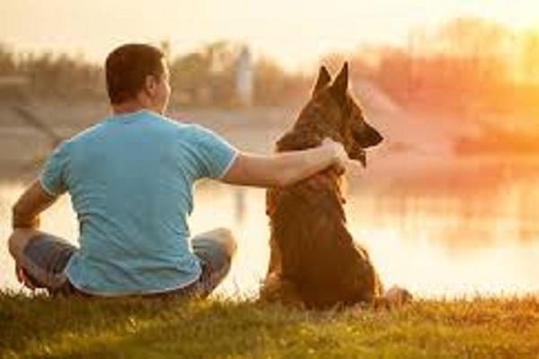 Nghiên cứu: Con người nhận nuôi chó như cách... chọn bạn đời