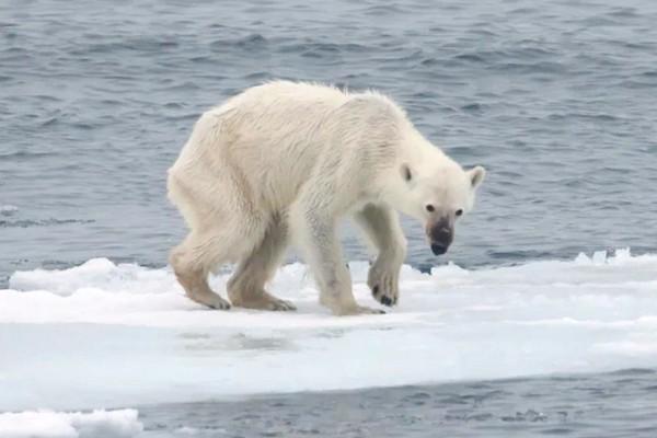 Nghiên cứu: Biến đổi khí hậu ngày càng khắc nghiệt, nhiều loài động vật không thích ứng kịp