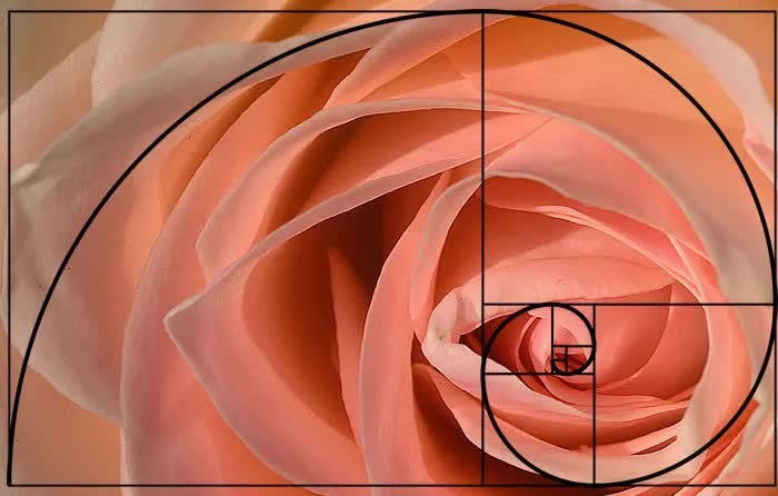 Cùng chiêm ngưỡng 7 ví dụ đẹp ẩn chứa dãy số Fibonacci kỳ diệu trong tự nhiên