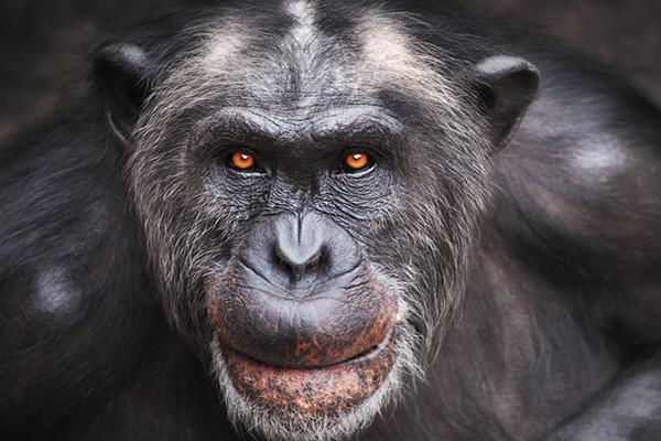 Ăn thịt đồng loại là hành động thường thấy trong thế giới động vật, tuy nhiên tại sao lại cấm kỵ với người?
