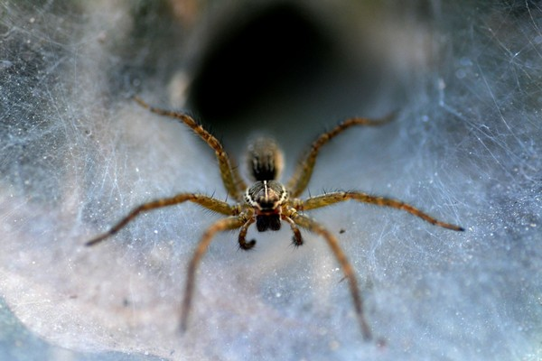 Biến đổi khí hậu khiến loài nhện hung hăng hơn và đó có thể là tin không vui