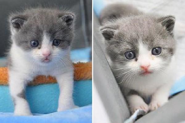 Trung Quốc lần đầu tiên mở dịch vụ nhân bản mèo, giá 800 triệu đồng