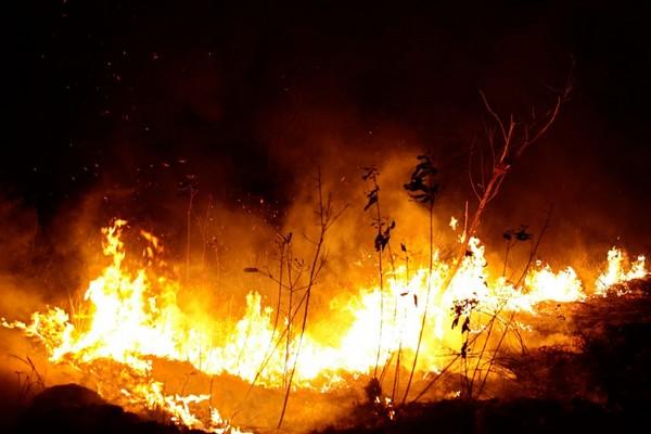 """Các nước giàu nhất thế giới """"chỉ"""" quyên góp 22 triệu USD để cứu rừng Amazon khỏi """"giặc lửa"""""""