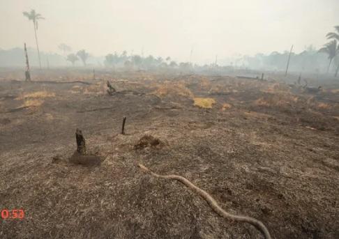 Rừng Amazon bị cháy: Brazil từ chối 20 triệu đô la của G7
