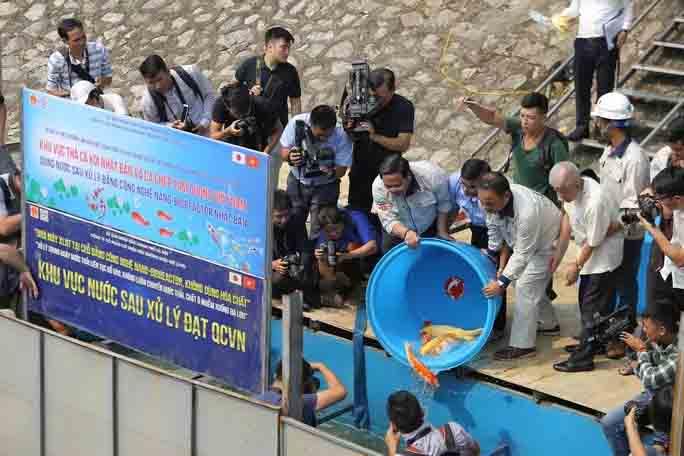 Chuyên gia Nhật thả cá Koi xuống sông Tô Lịch (khu vực được quây để thí điểm)