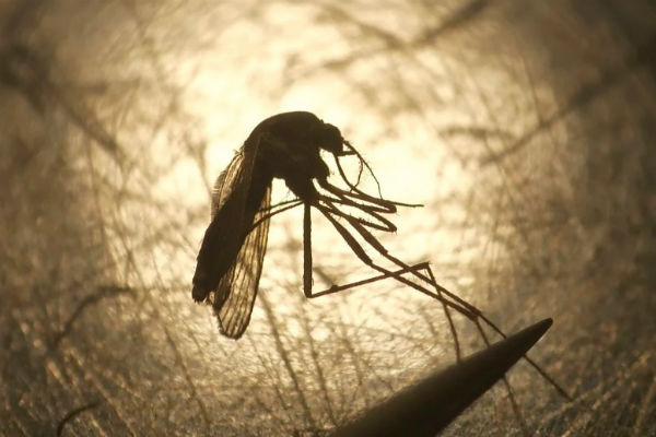 Người đàn ông khỏe mạnh đột ngột tử vong sau 9 ngày bị muỗi đốt